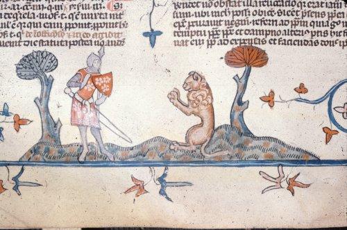 Lion begging