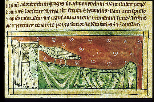 Caladrius bird