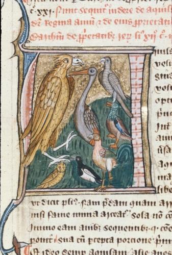 Aquila (Eagle)