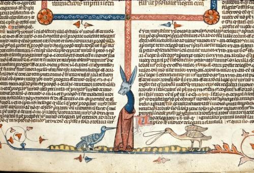 Birds and donkey