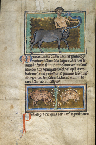 Centaur and hedgehogs