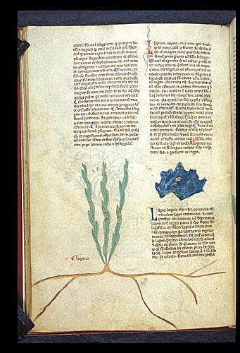 Liquorice and Lapis Lazuli