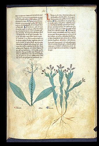 White Lily and Tea-Tree