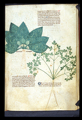 Mandrake and Baldmoney