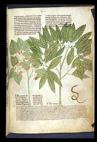 Melegueta Pepper, and Nux Vomica