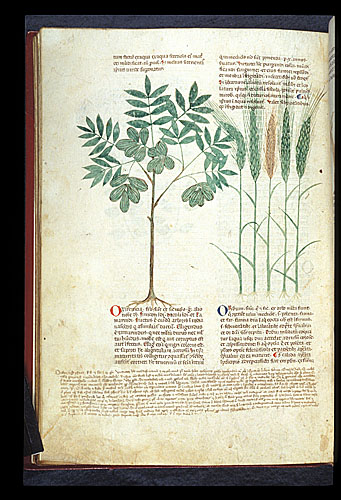 Tamarind and Barley