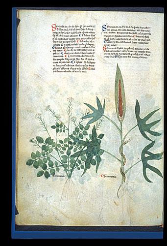 Watercress and Dragon Arum