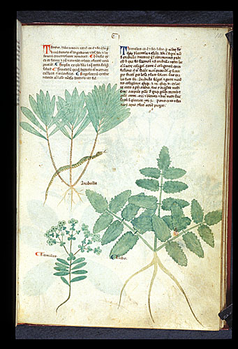 Spurge, Cypress Spurge, and Turpeth Root