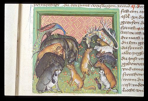 Fox on a pilgrimage