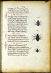 Burney 97, f. 29