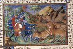 Battle against wild bulls