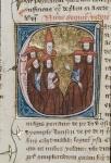 Cardinales (Cardinals)
