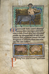 Centaur and hedgehogs