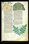 Orpiment, Bitumen, and Acanthus