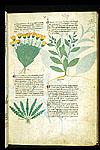 Pot Marigold, Rustyback Fern, and Candellaria