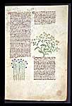 Flax Dodder and Cardamom