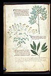 Rock Rose, Spindle, and Spurge Laurel