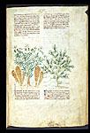 Cytinus and Juniper