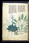 Devil's Bit Scabious, Herb Robert, and Storksbill
