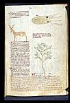 Deer Cartilage, Cuttlebone, and Frankincense