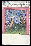 Fox and ape