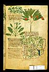 Wood Sorrel, Sorrel, Strawberry Tree, and Balsam