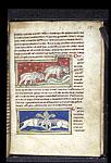 Sheep; rams