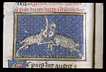 Ram fighting a he-goat