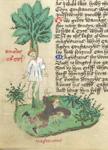 Decius and Magnentius