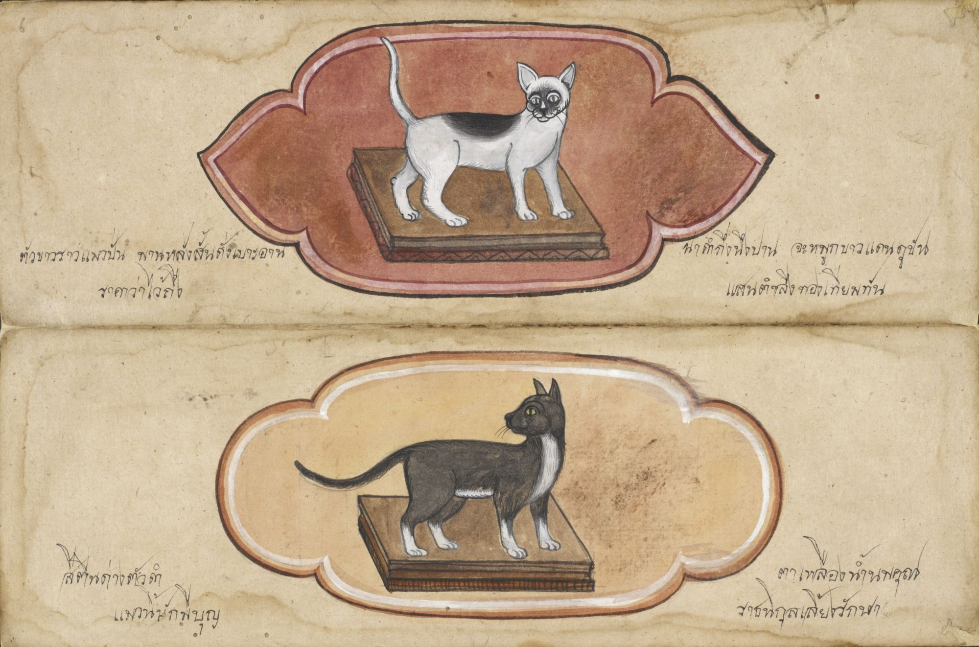 Paper folding book with 23 illustrations of cats from central Thailand, 19th century.