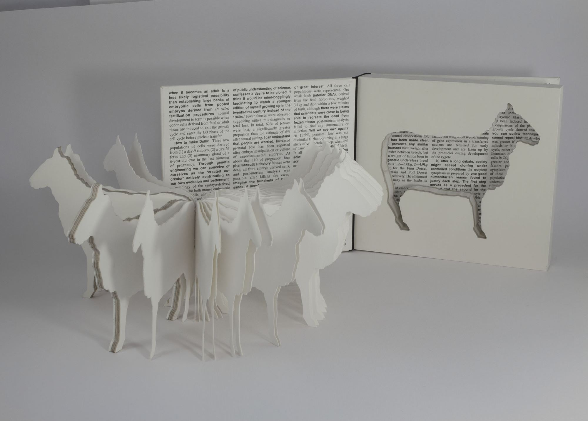 The world's first artificially cloned animal, Dolly the sheep, is reproduced repeatedly in this edition of seventeen artist's books, Dolly: edition unlimited.