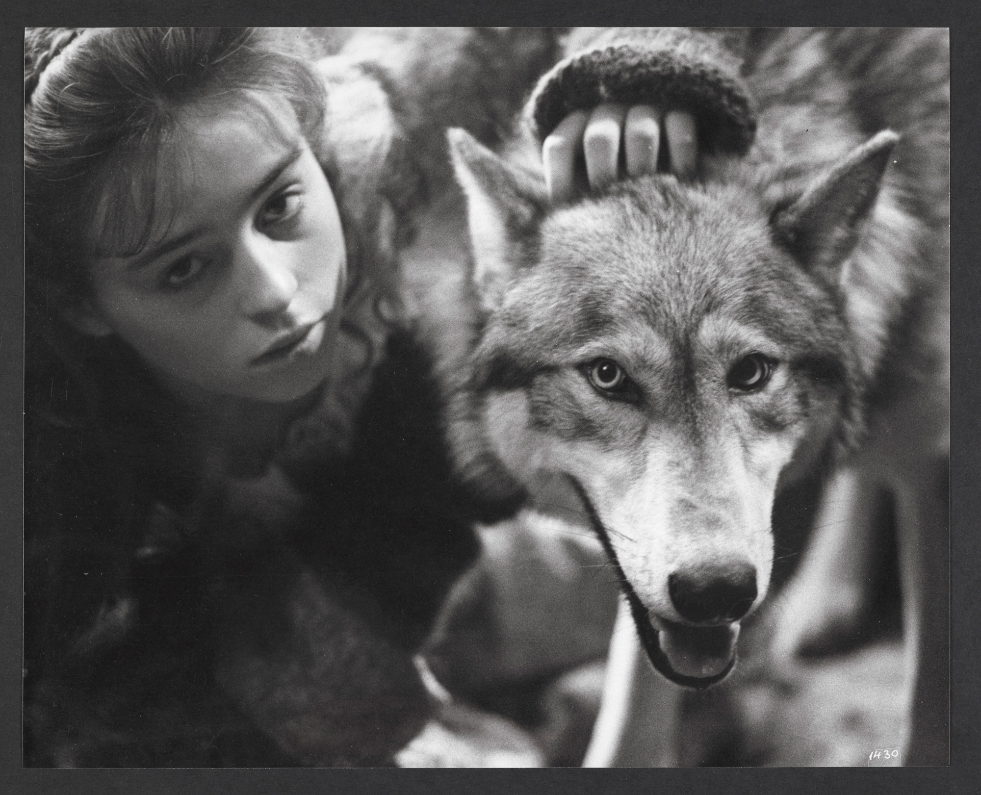 Angela Carter's wolf tales ('The Werewolf', 'The Company of