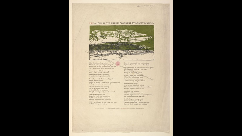 Large sheet of paper containing the poem 'Pike' by Ted Hughes, with a woodcut illustration of the fish