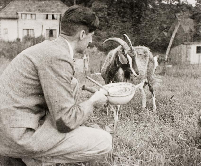 Photograph of Orwell feeding Muriel the goat by Collings