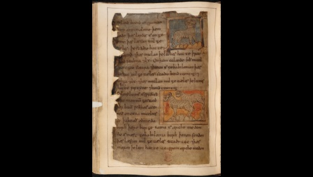 A page from the Beowulf Manuscript, featuring the Marvels of the East, with illustrations of a single horned sheep facing right, and two horned sheep facing left.