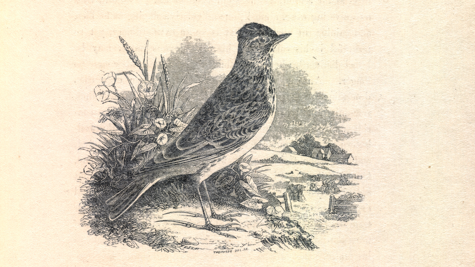 An introduction to 'To a Skylark'
