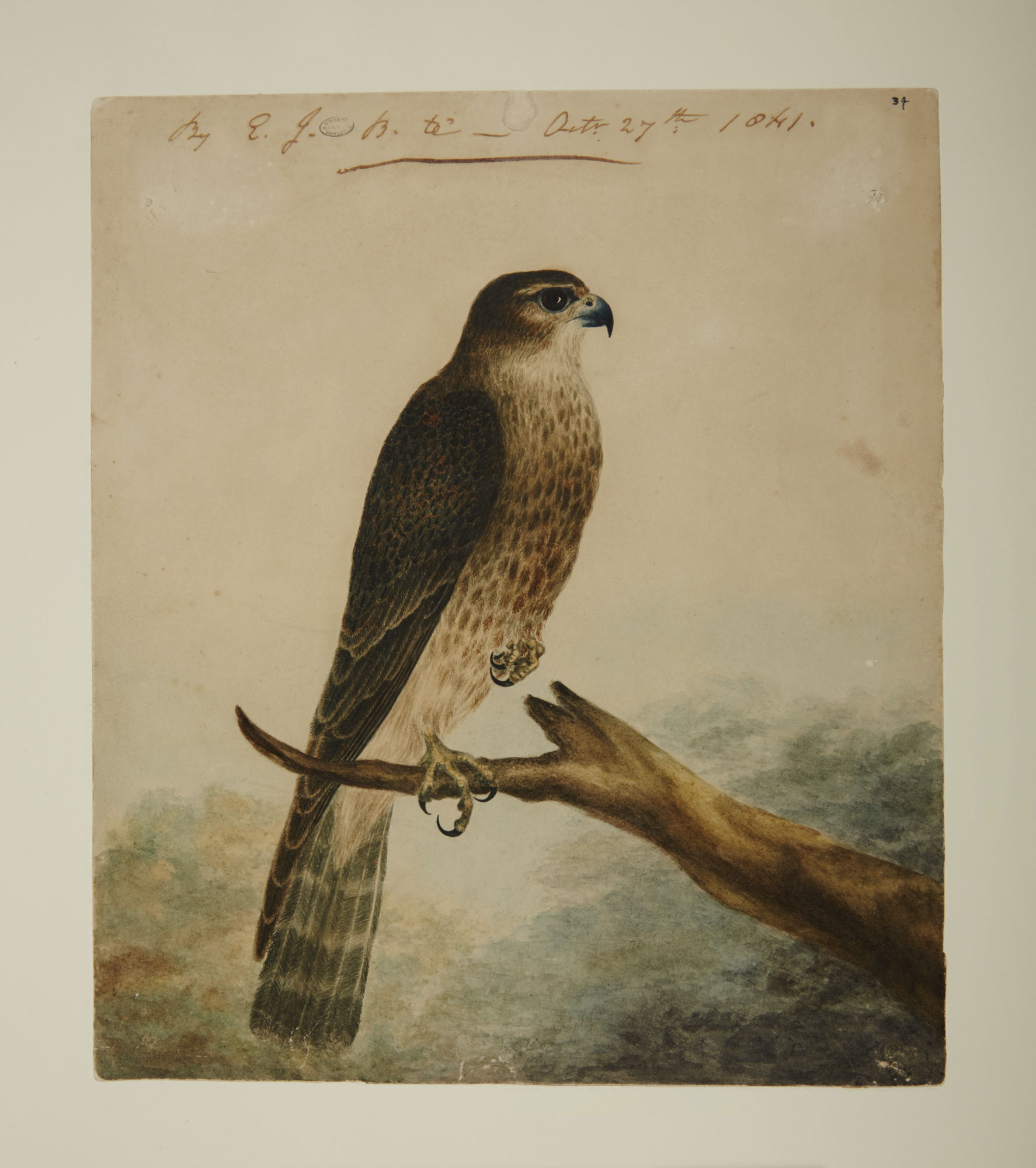 Nero, body of a merlin, by Emily Bronte [folio: 0]