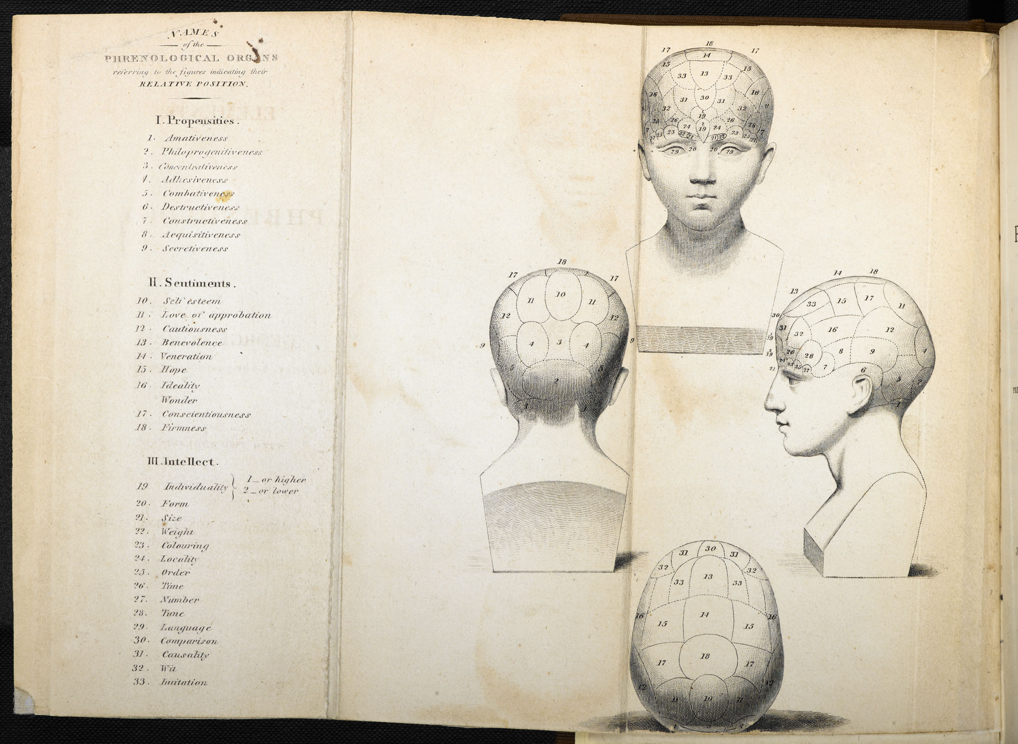 Phrenological diagrams by George Combe [page: fold-out frontispiece]