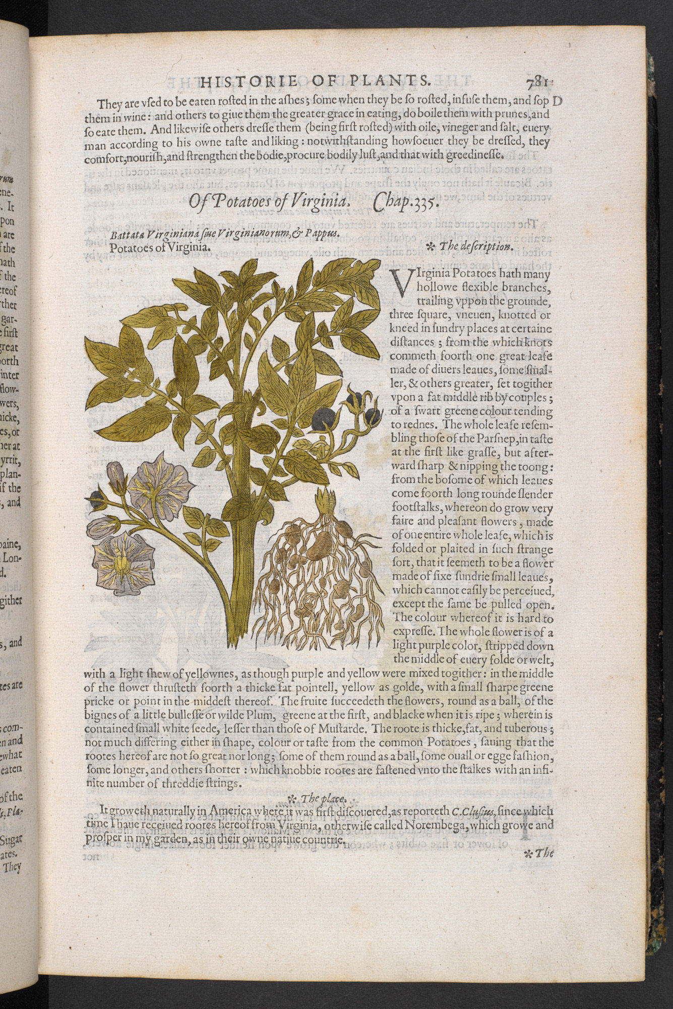 Poisons, sleep-inducing plants and love potions in Gerard's Herbal