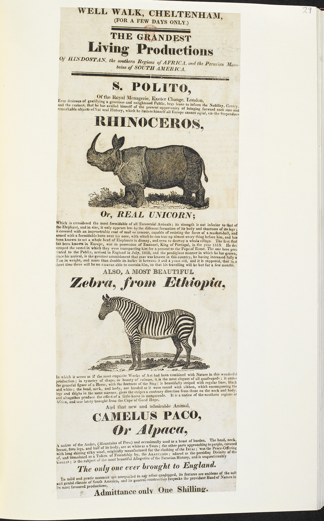 Poster advertising the exhibition of a rhinoceros, zebra and alpaca