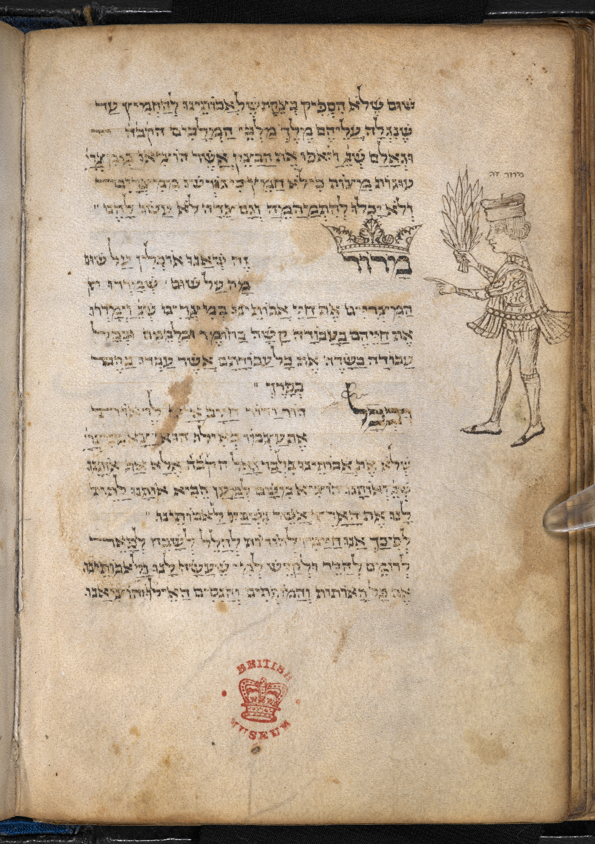Marginal drawing showing a young man holding the maror (bitter herb) and pointing to the word maror at the beginning of the passage 'This bitter herb', Add MS 26957, Hebrew Manuscripts Digitisation Project, British Library
