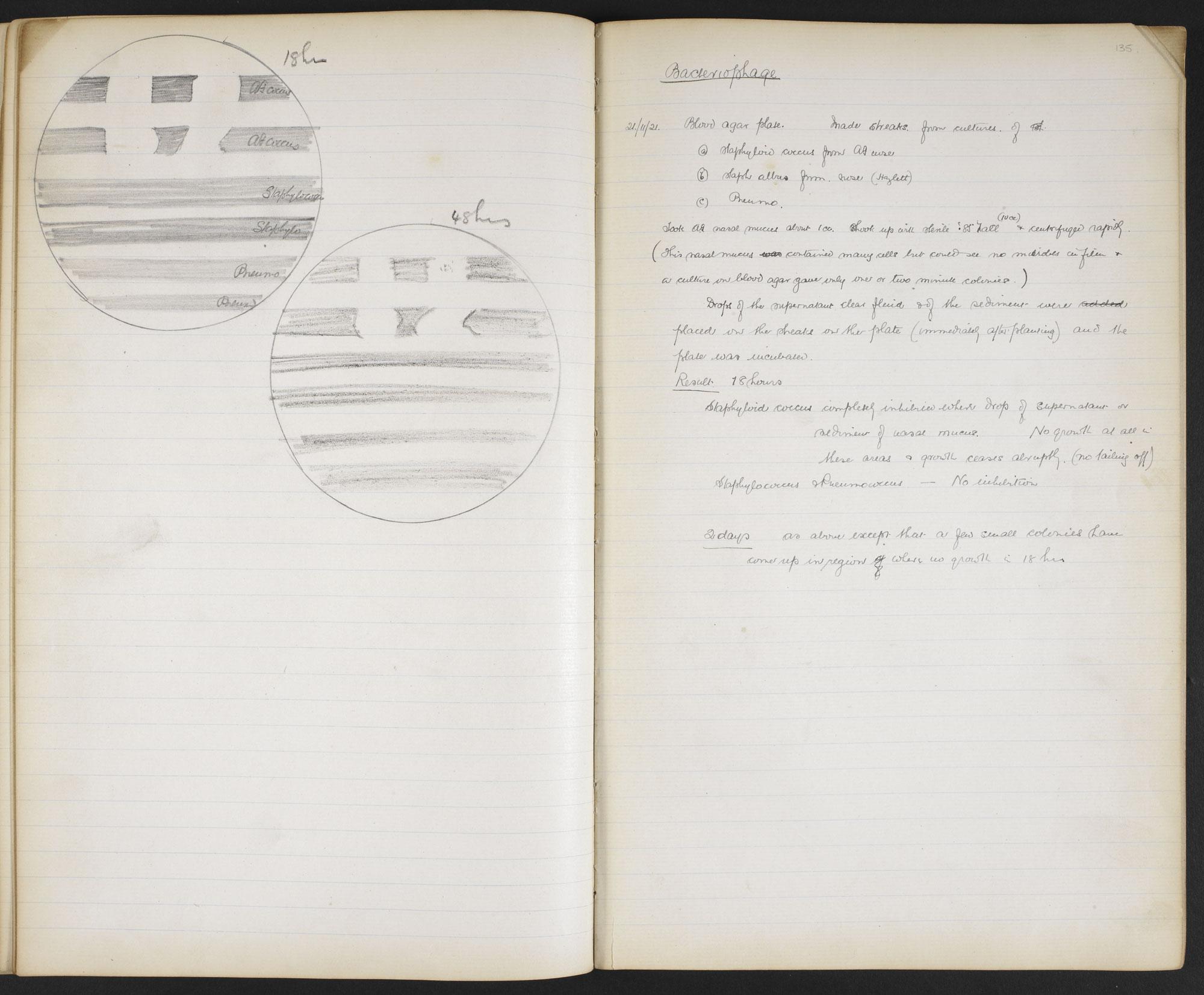 Sir Alexander Fleming's Lab Books