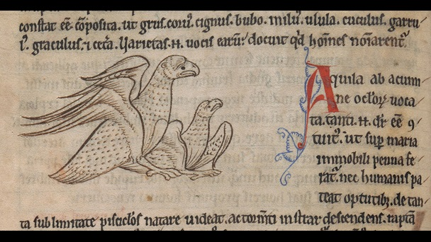 An illustration of two eagles from a 12th-century bestiary.