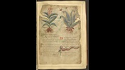 A page from the Old English Herbal, featuring illustrations of two plants and a serpent.