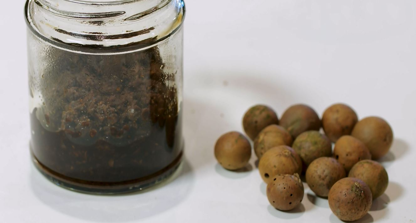Making Medieval Manuscripts: Oak Gall Ink - The British Library