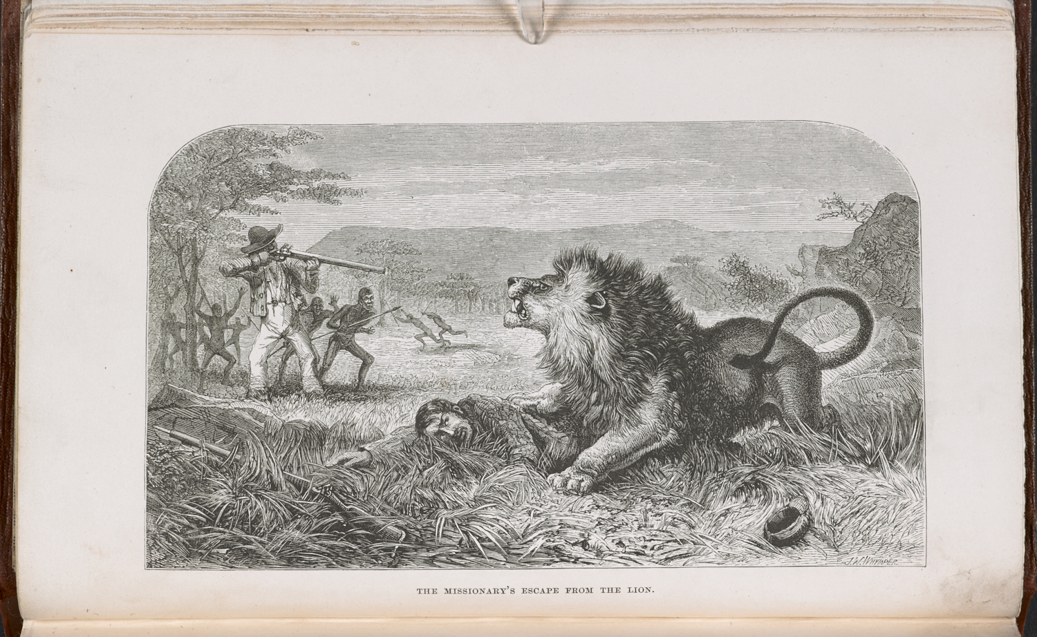 Illustration showing David Livingstone's encounter with a lion published in Missionary Travels and Researches in South Africa