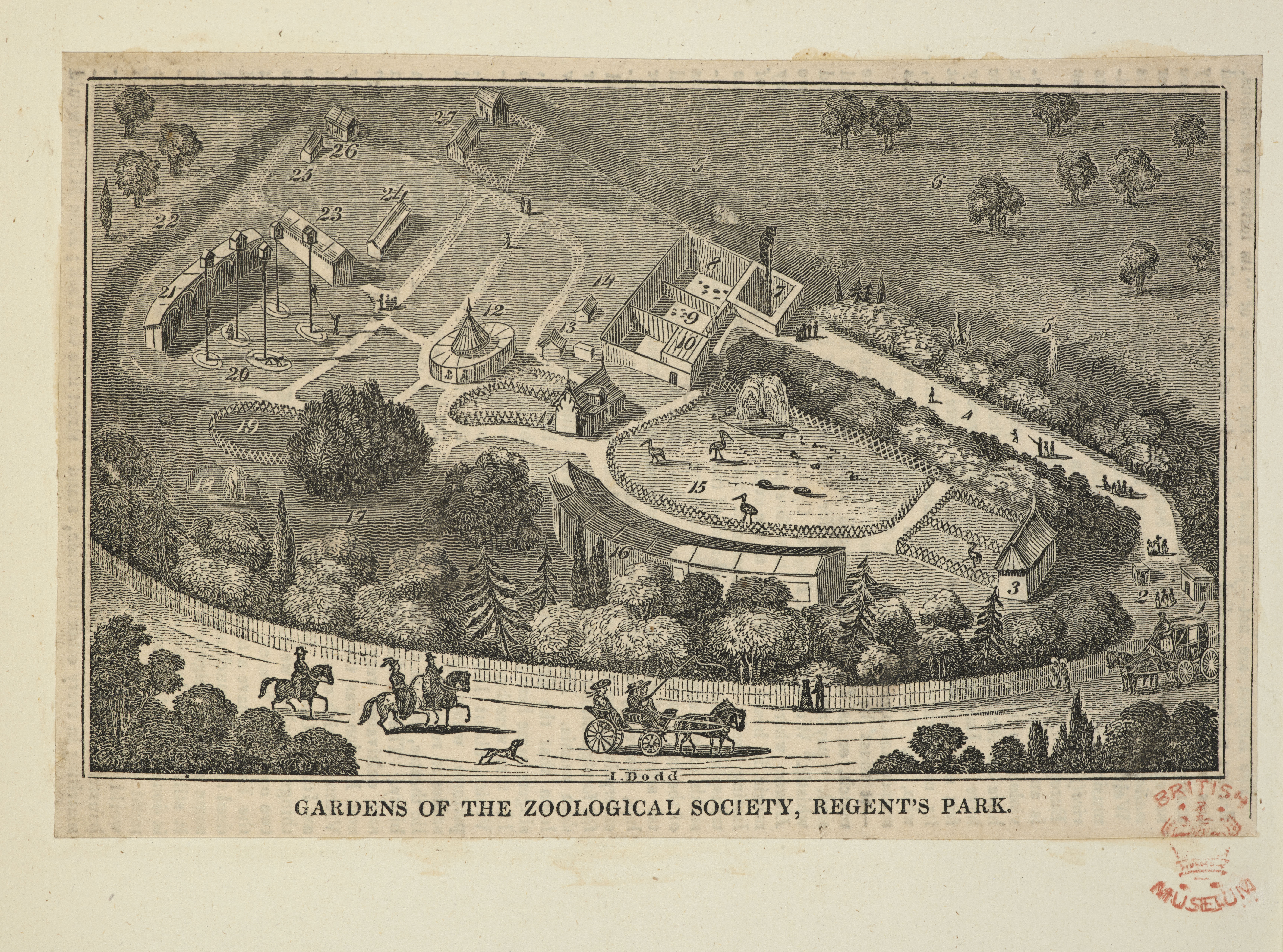 A print showing the Gardens of the Zoological Society in Regents Park.