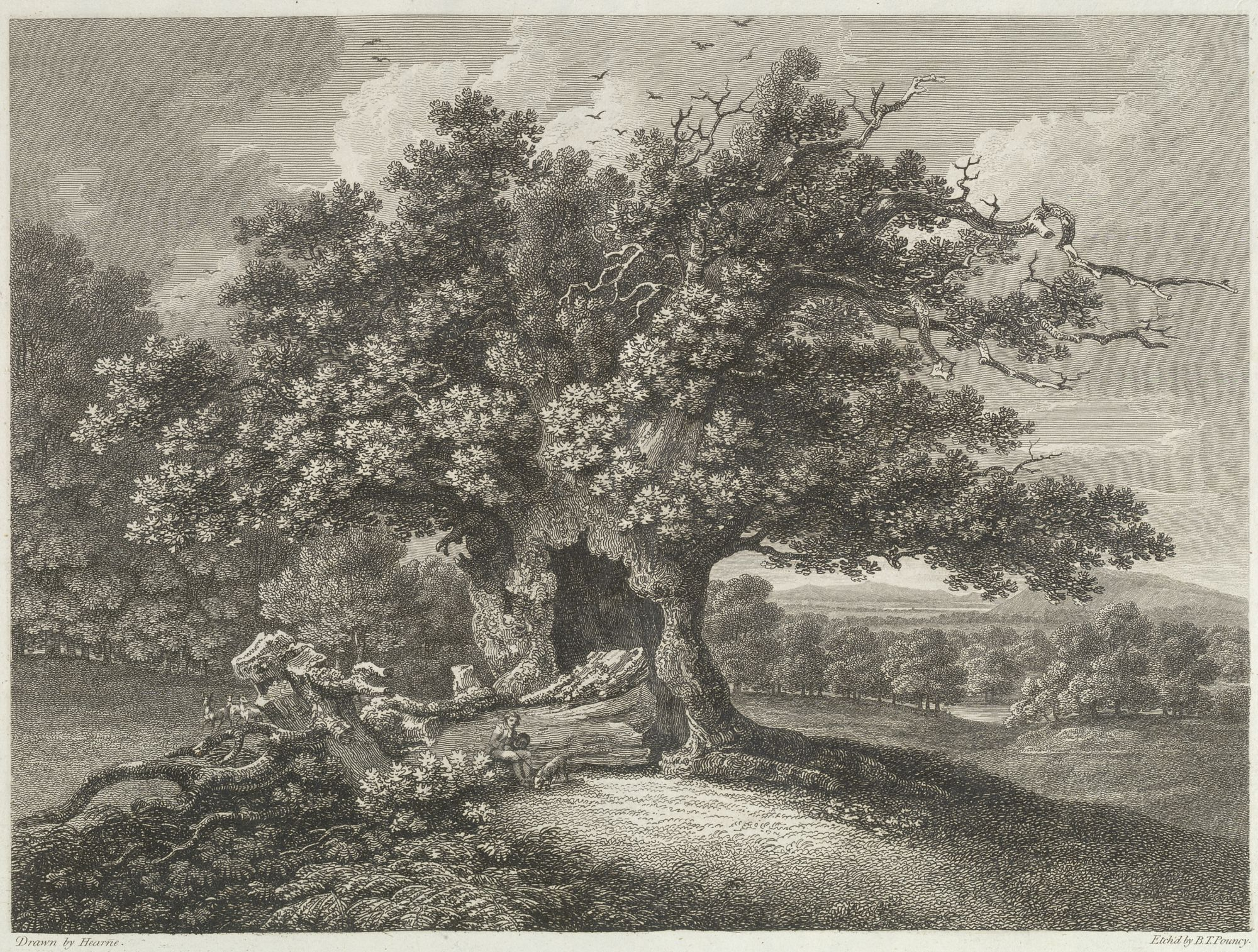 Benjamin Thomas Pouncy (–1799), after Thomas Hearne (1744–1817), Oak in Moccas Park, 1798, etching, Maps K.Top.15.101.a.