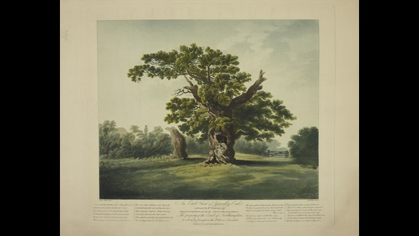 Robert Pollard (1755–1838), after James Andrews (–1817), East View of Yardley Oak, 1805, hand-coloured aquatint and etching, Maps K.Top.32.(37.)