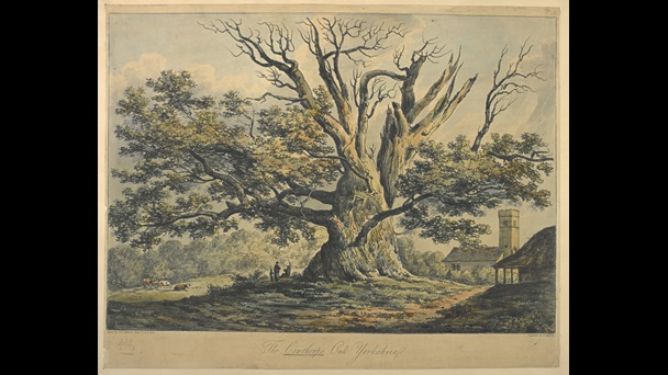 John Laporte (1761–1839), after Walden Henry Hanmer (1761–1825), Cowthorpe Oak, 1806, hand-coloured soft-ground etching, Maps K.Top.45.41.2.